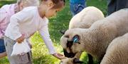 Feed the animals at Staunton Country Park