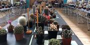 A selection of cacti at the BCSS Portsmouth Show