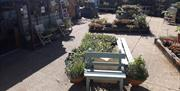 Plants to browse and buy at the Waterfront Garden Centre