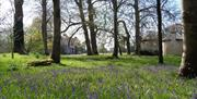 Stansted House bluebells