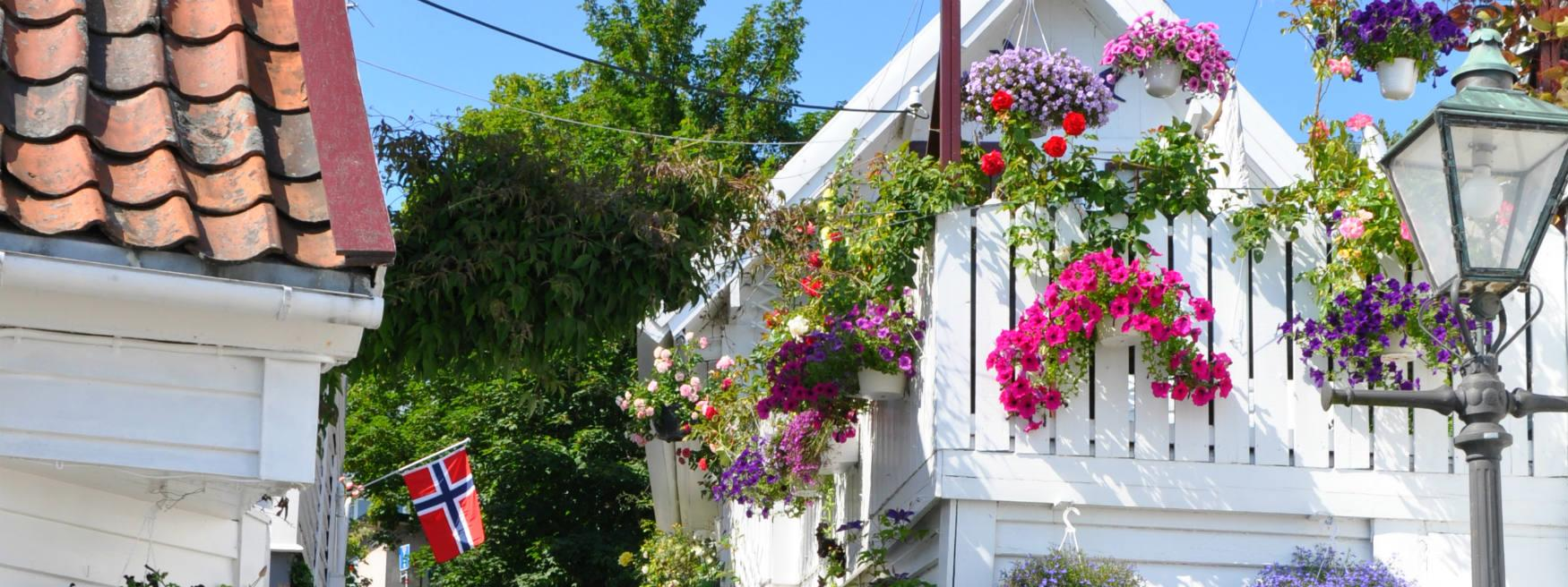 Gorgeous flowers in Old Stavanger