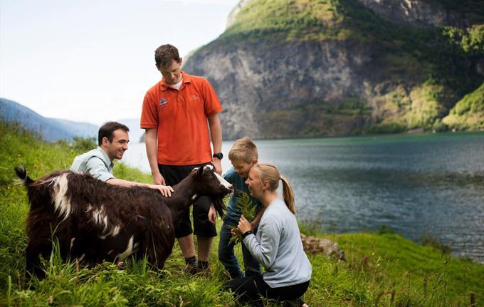 Undredal family goat