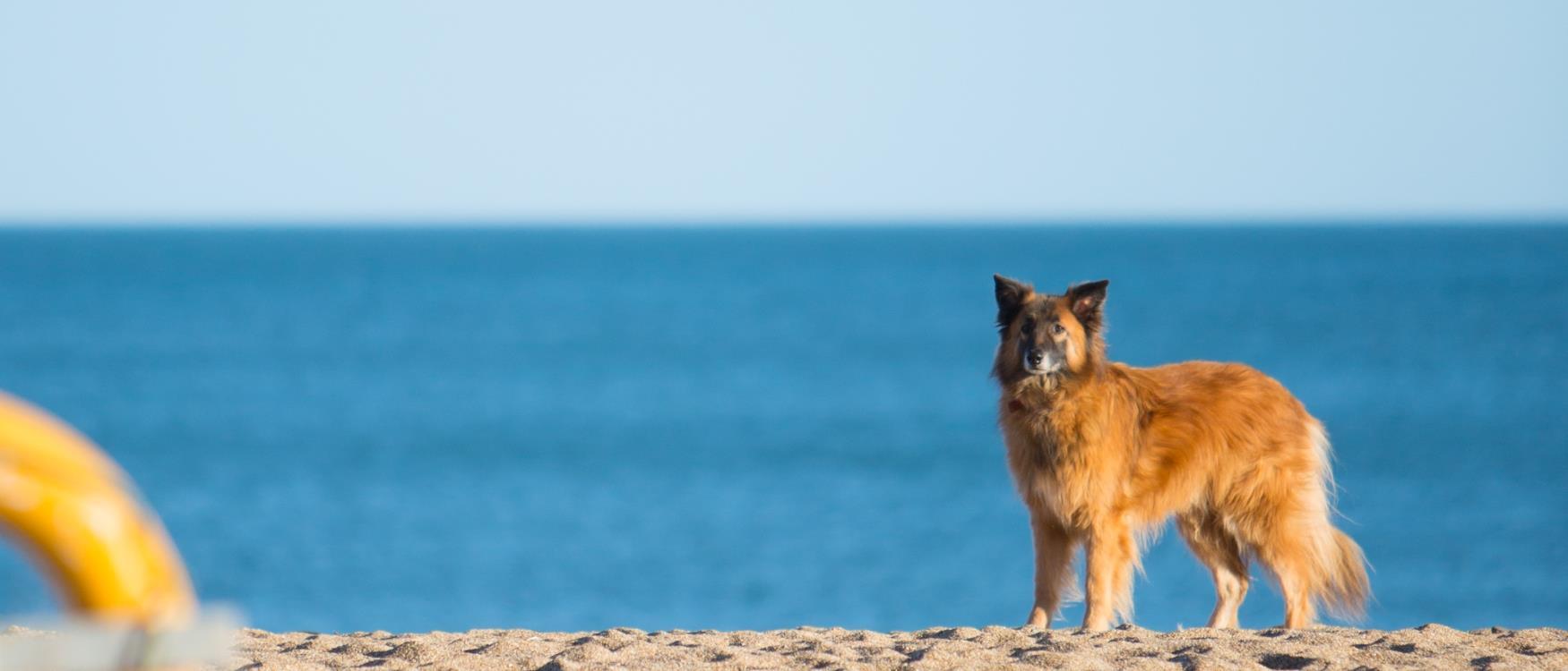 Dog on South Devon Beach