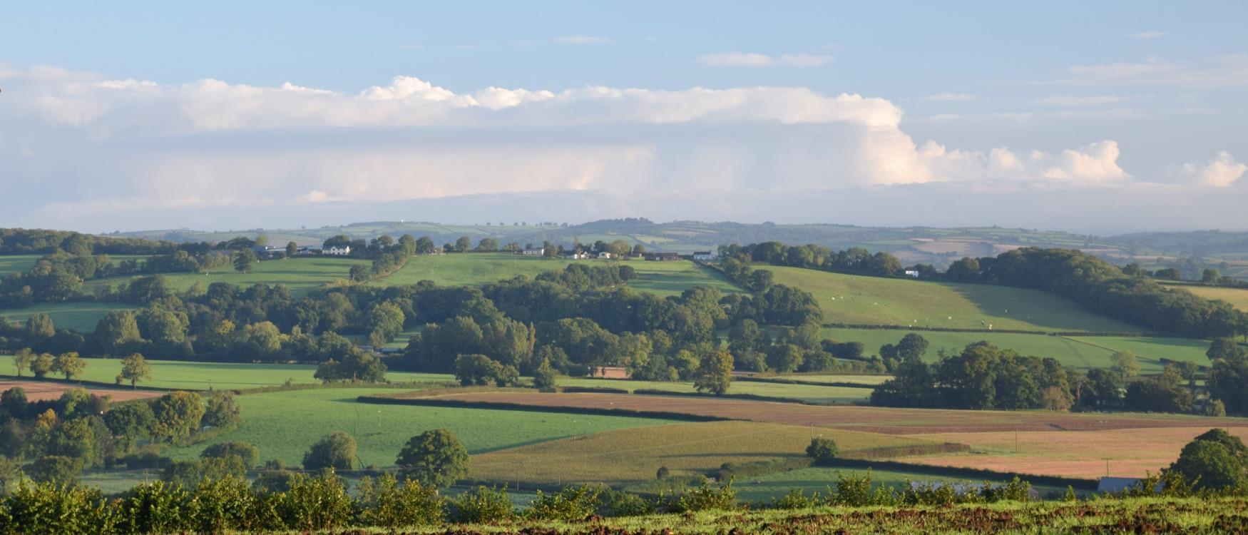 Countryside around Cullompton