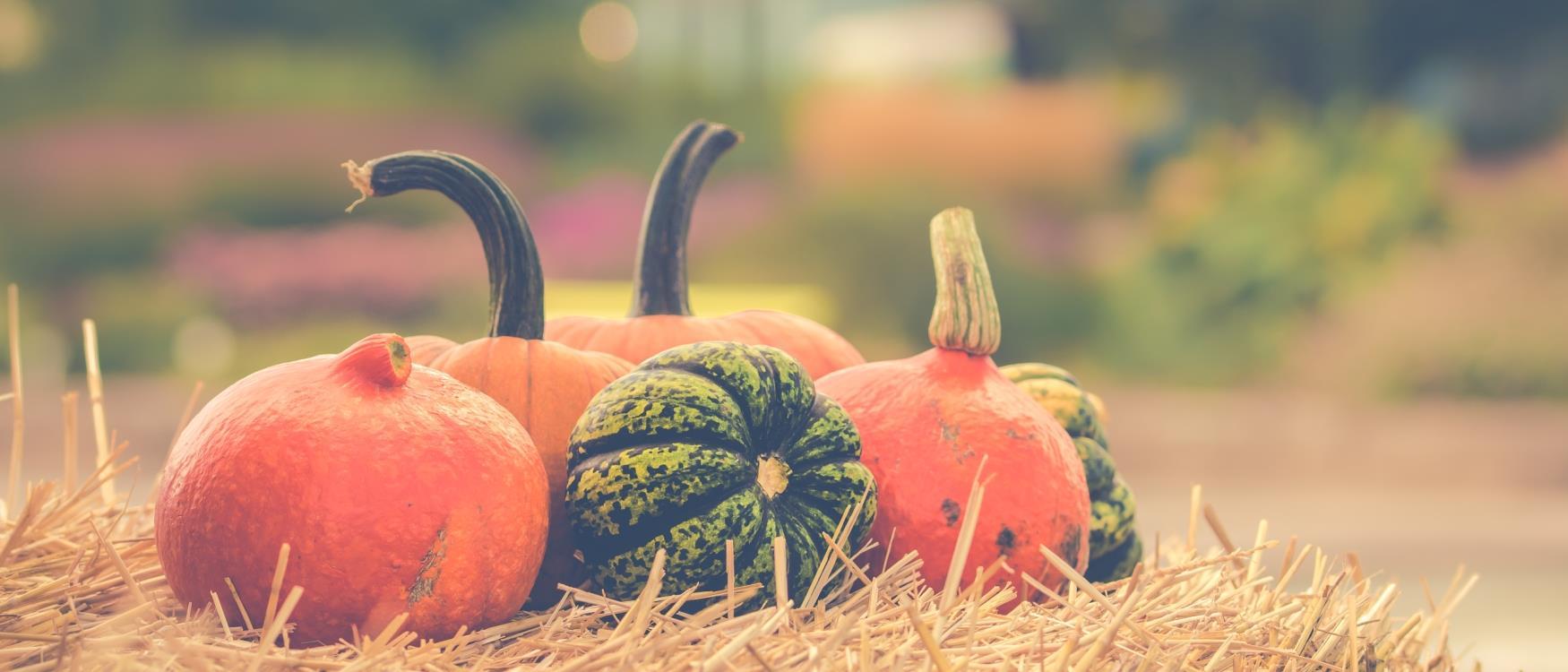 Pumpkins, Halloween