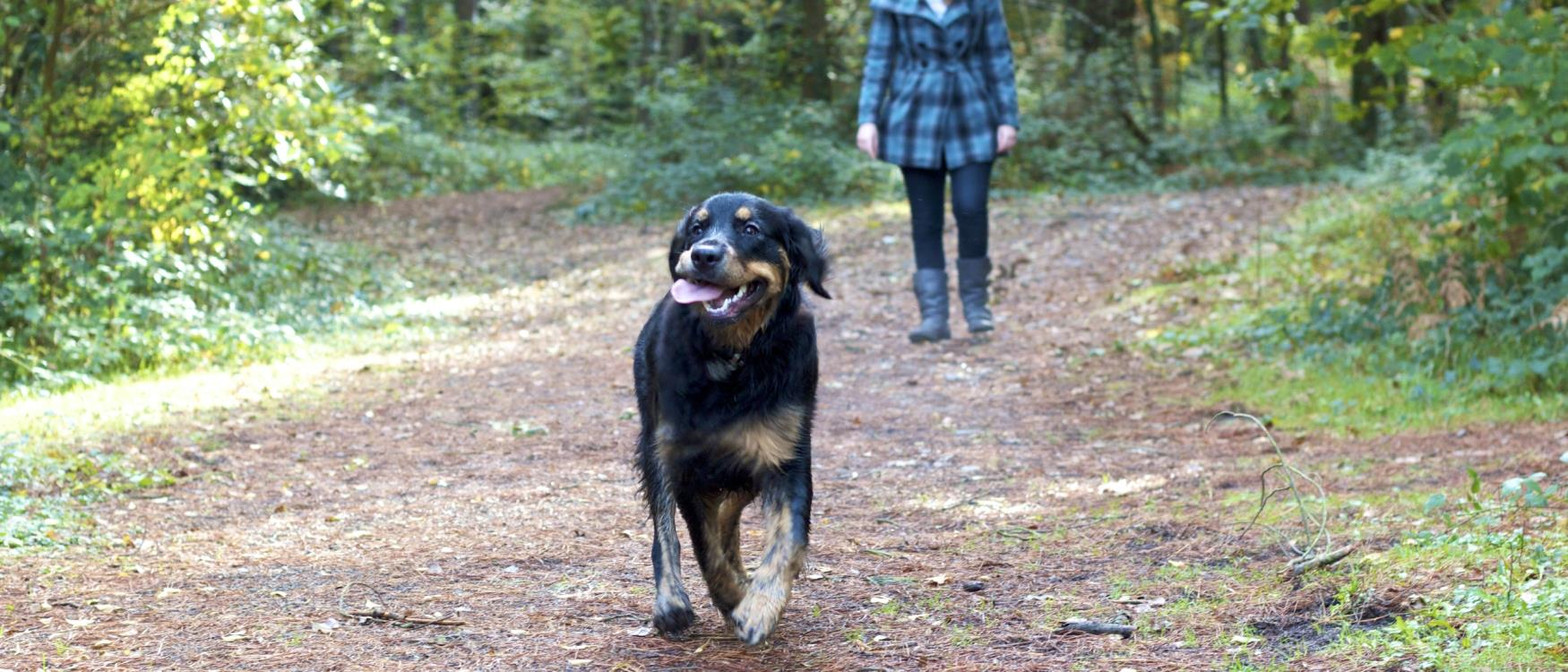 Dog at Stover Country Park