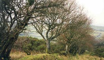 Okehampton, Dartmoor