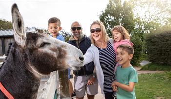 Family meet friendly donkey on adventure trail