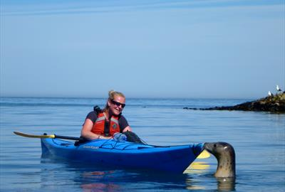 Friendly Seal!