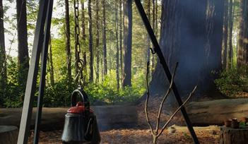 Foraging & Forest Bathing