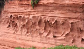 Dawlish Warren Cliffs: Photo supplied by Craig Dixon, DCC
