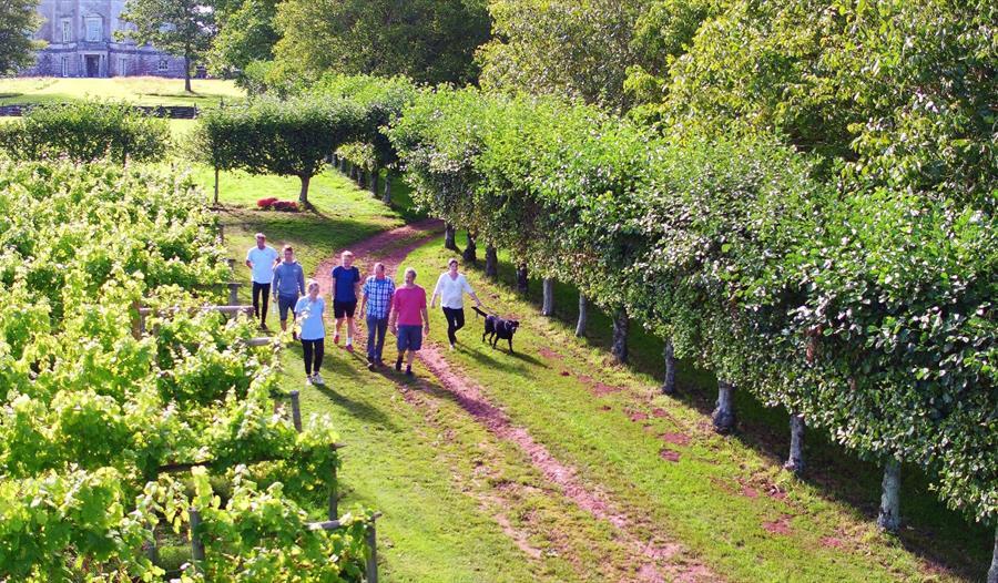 Sharpham Vineyard walk