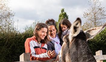 Family enjoys meeting donkey