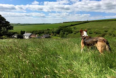 Dittiscombe Estate & Cottages in South Devon