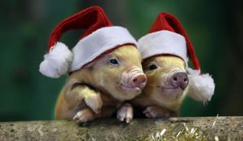 Christmas at Pennywell Farm