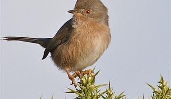 Bird at RSPB Aylesbeare nature reserve