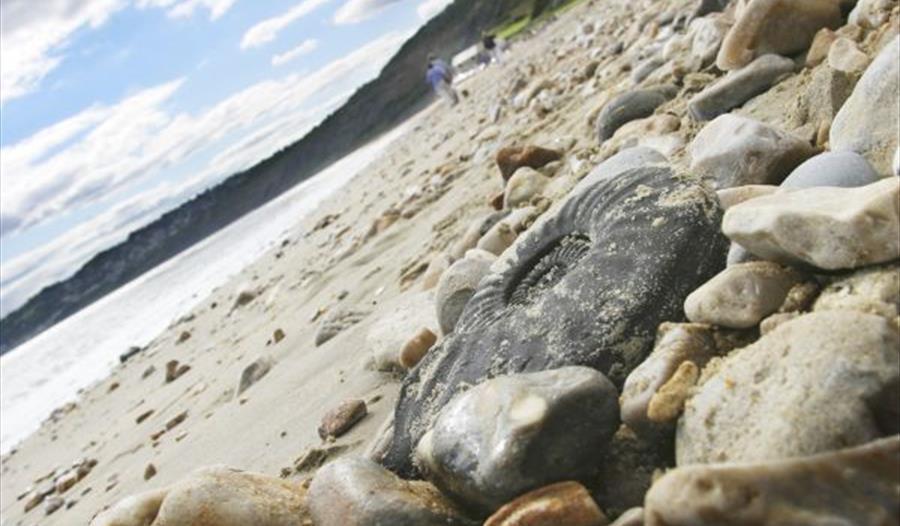 Jurassic Coast Fossil