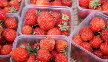 Newton Abbot Produce Market