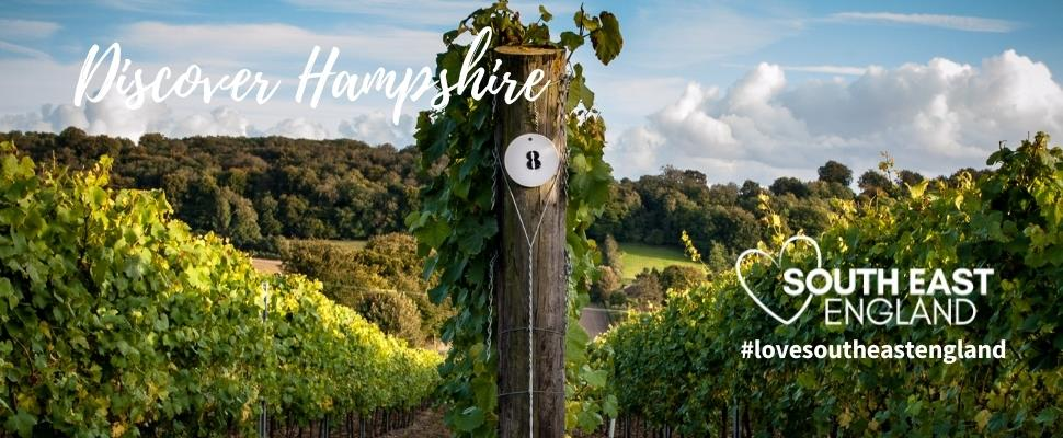 Discover the oldest commercial vineyard in England, Hambledon Vineyard in Hampshire