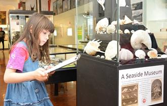 Child reading information by a display of seashells at Bexhill Museum