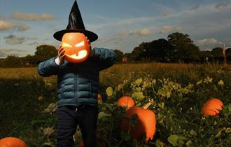Pick Your Own Pumpkins: Picking Patch