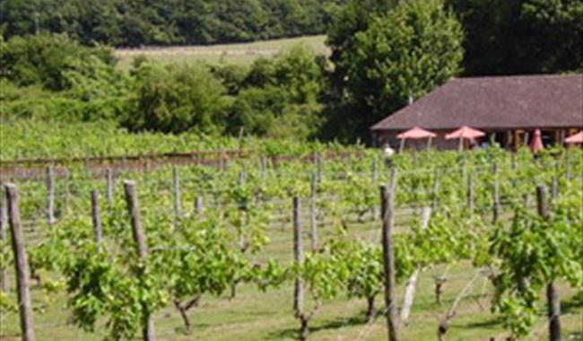 Elham Valley Vineyard
