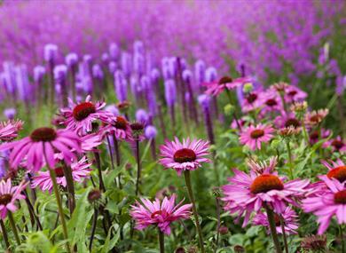 Sussex Prairie Garden copyright Marianne Majerus