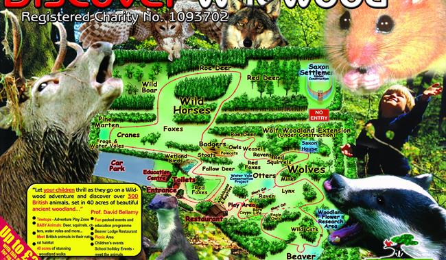 Discover the animals of the Wildwood in Canterbury