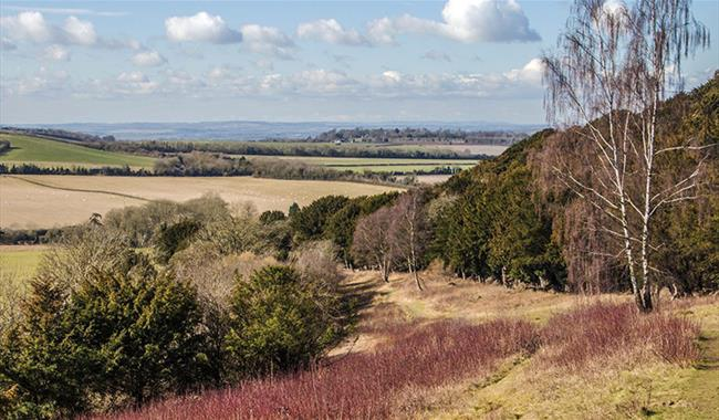 Watlington Hill