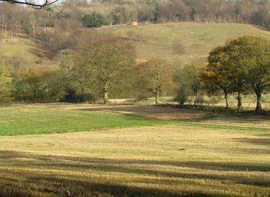 Abinger Roughs and Netley Park