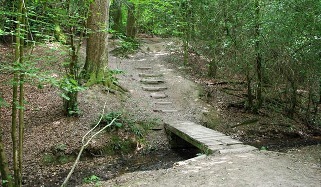 Leechpool Woods