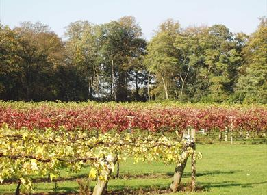 Brightwell Vineyard