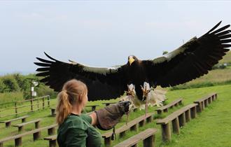 Eagle Heights Wildlife Foundation