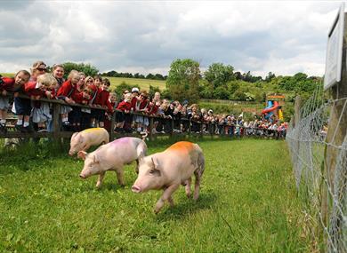Bocketts Farm