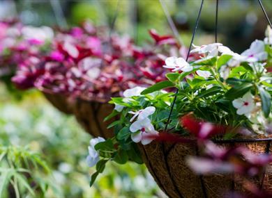Bampton Garden Plants