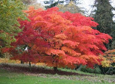 Batsford Arboretum & Garden Centre