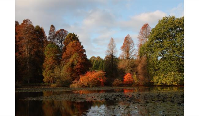 Bedgebury National Pinetum & Forest