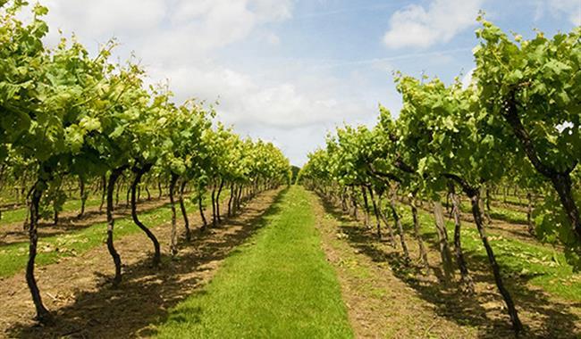 Biddenden Vineyards Ltd