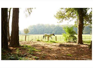 Checkendon Equestrian Centre