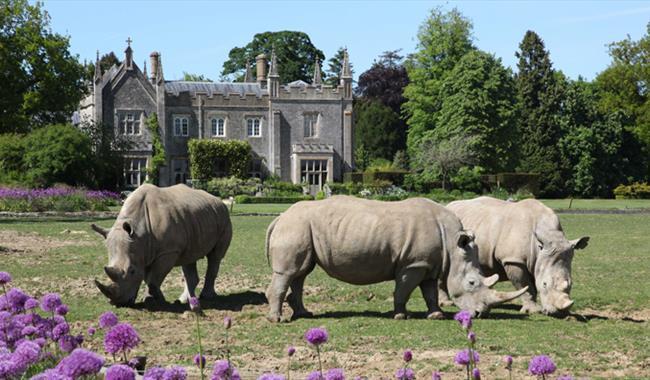 Cotswold Wildlife Park rhinos