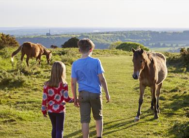 Time For Worthing  Cissbury Ring ponies kids