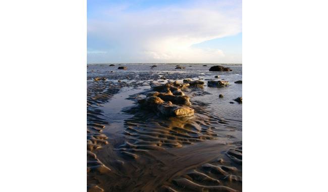 Fossil hunting at Bognor Regis Beach