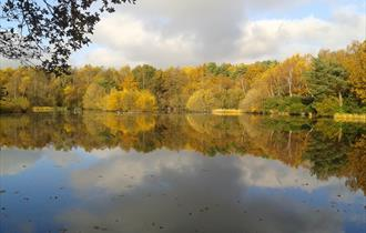 Hammond Pond at Lightwater Country Park