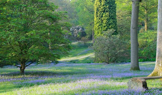High Beeches Woodland and Water Garden