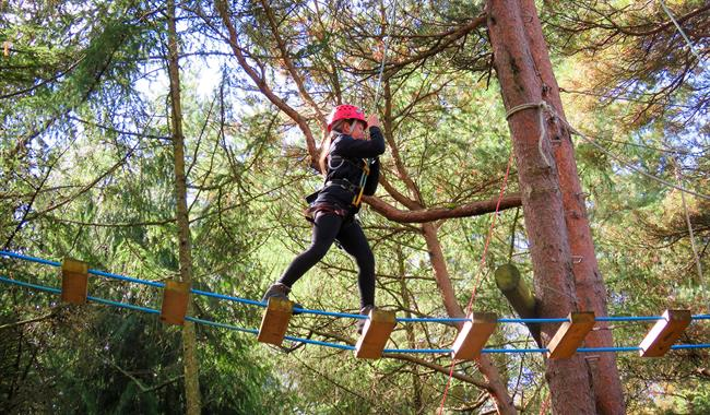 Woodland Adventure Day with New Forest Activities