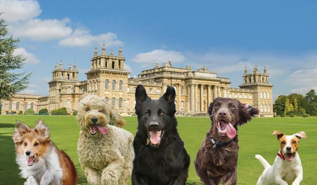Paws at the Palace