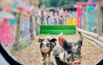 Summer fun at Godstone Farm