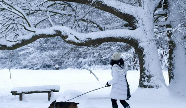 Witley Common