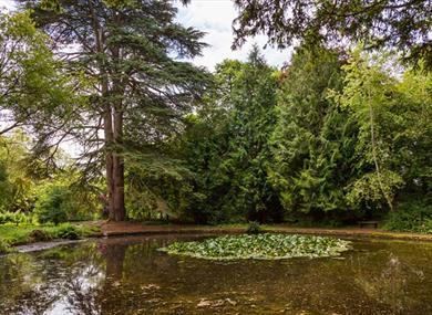 Wychwood Wild Garden