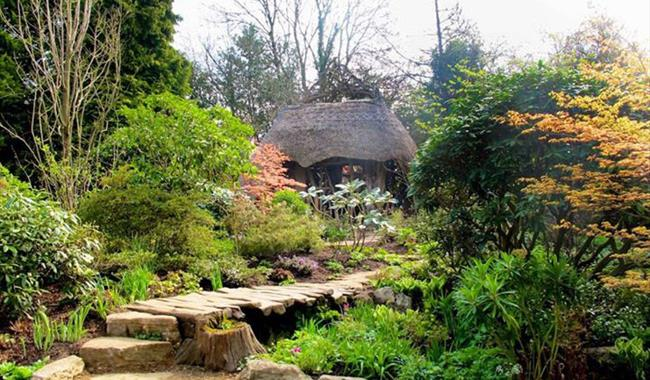Chelsea Garden - Furzey Gardens